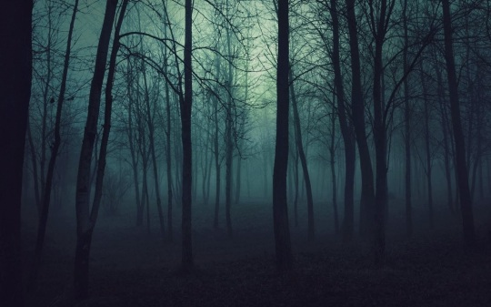 creepy_trees_dark_forest_mist_1920x1080_wallpaper_High Resolution Wallpaper_2560x1600_www.wallpaperhi.com (1)